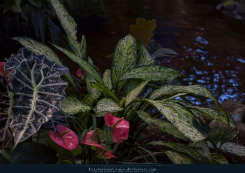 Plant by the water by kuschelirmel-stock