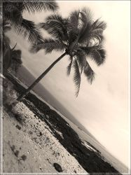 palm tree one by clashed