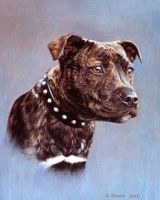 Staffordshire Bull Terrier by NewAgeTraveller