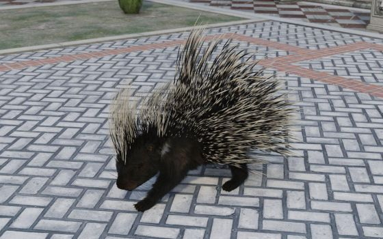 Courtyard Porcupine 2 by efredrules