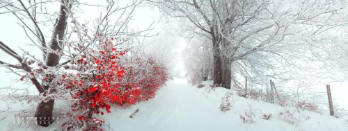 -Last red poem- by Janek-Sedlar