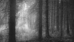 Monochrome Trees by Pajunen