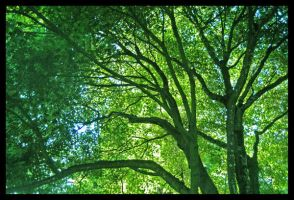 Tree Star Enchantment by TeaPhotography