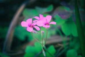 Bloom by cindywebbphotography