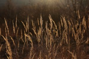 Gras At Sundown by LoveForDetails