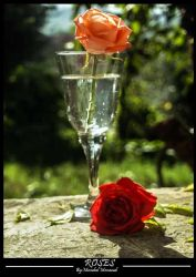 glasses and roses by mesod