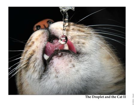 The Droplet and the Cat II by mordoc