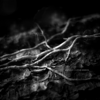 Black Roots by DREAMCA7CHER