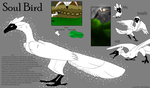 Soul bird ref by SolinTheDragon