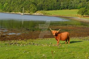 in the Highlands by Frollino