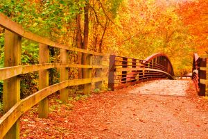 Autumn bridge by dolphintom