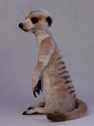 Dickens the meerkat by LisaAP