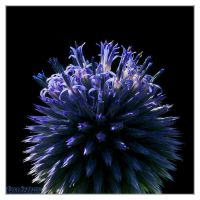 Blue orb by DianePhotos