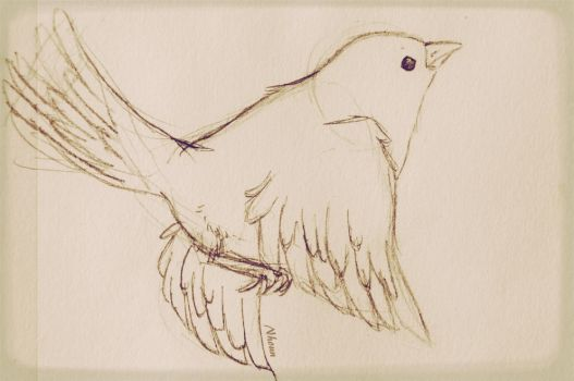 Bird sketch by Nhoun