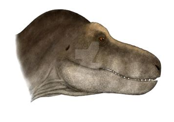 The largest T. rex skull ever found? by Pachyornis