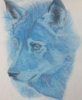 Blue wolf by seakliff