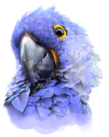 Parrot by xMits