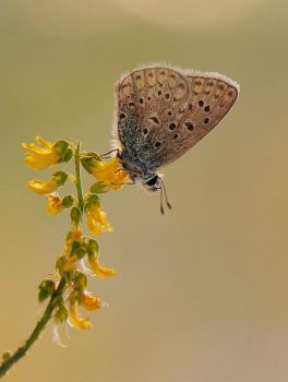 The small butterfly by dralik