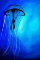 Jellyfish. by miphi017