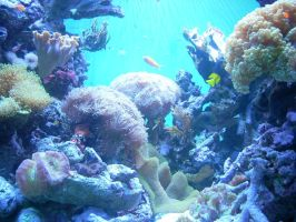 Coral Reef by Moonlight007