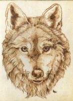 Wolf Stare by Aliehs