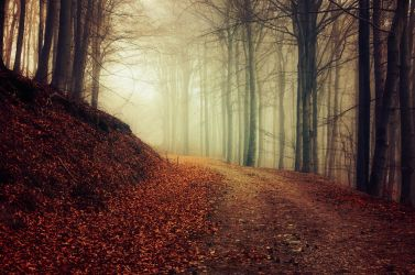 Autumn Walk XXXVII. by realityDream
