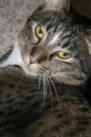 Cat look by JRHorvath