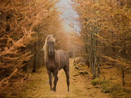 Fall Day Rocky Mountain Horse by divadoo