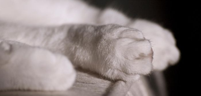 Cat-paw2 by NorbDoe