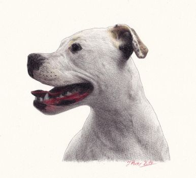 Woof2 by pixeleiderdown