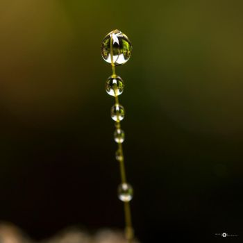 row of drops by MarcosRodriguez