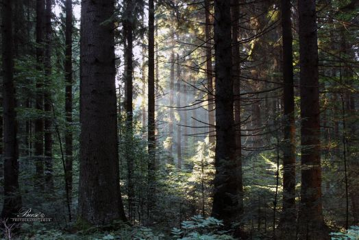 The Lights of Forest by Becso