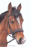 Horse portrait by Kot-Filemon