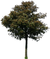 tree 44 png by gd08
