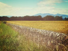 Fields and Isle of Arran by martinemes