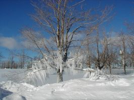 Ice Tree by Lectrichead