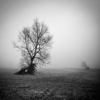 Portrait of the tree VII by EmilStojek