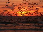 Birds on Sunset by TheJediClone