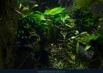 Underwater Plants 03 by kuschelirmel-stock