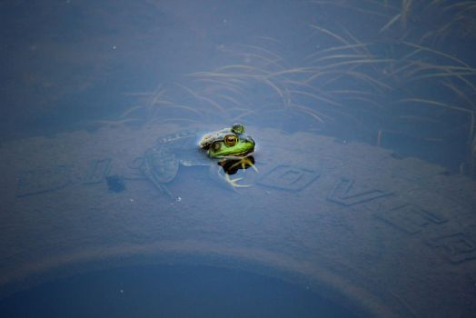 Tire Frog by KristaBell8