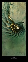 spider by eques