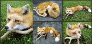 Petite Red Fox Soft Mount by WeirdCityTaxidermy