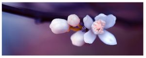 Spring Dream by Nataly1st