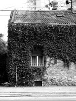 Old Ivy House by micecat