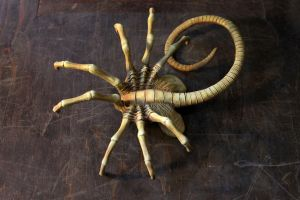 Facehugger by hontor