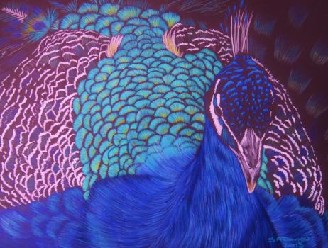 Peacock colour pencil drawing by shirls-art