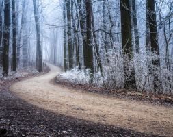 the path - wienerwald by 8moments