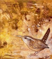 Carolina Wren study by ursulav