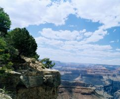 LV- Grand Canyon and Tree by lantairvlea