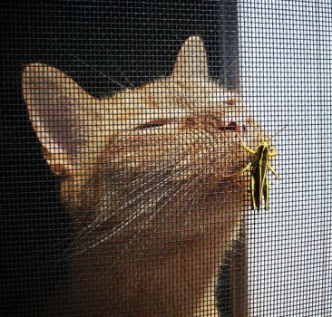 The Cat and The Grasshopper. by wish-and-dream-4ever